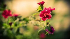 Summer Flowers Wallpaper 29977
