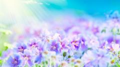 Summer Flowers Wallpaper 29991
