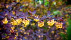 Summer Flowers Wallpaper 29998