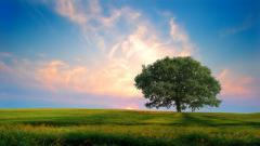 Summer Landscape 26618