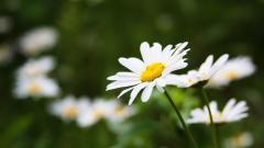White Flowers 7700