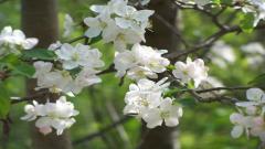 White Flowers 7705