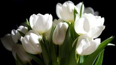 White Flowers 7718
