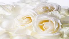 White Flowers 7721