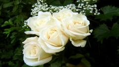 White Flowers 7724