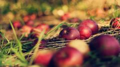 Wonderful Apples Wallpaper 43072