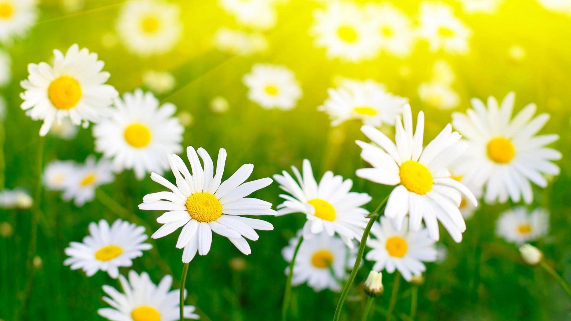 white flowers 7708