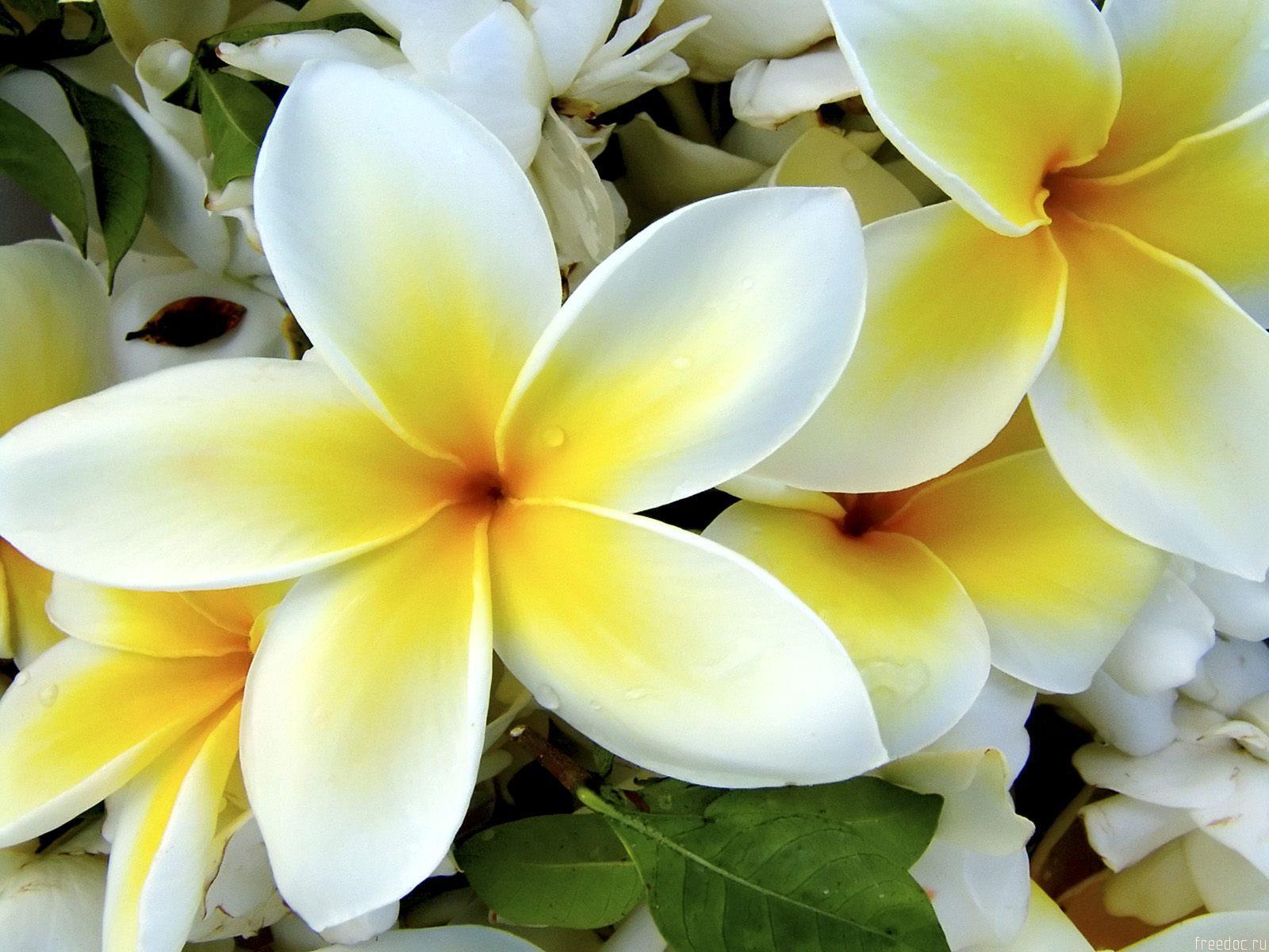 white flowers 7709