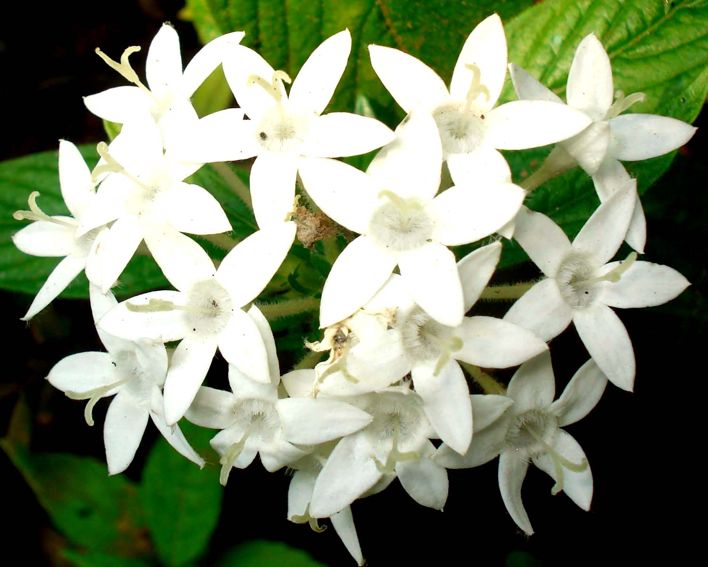 White Flowers 7710 1500x1200 Px Hdwallsource Com