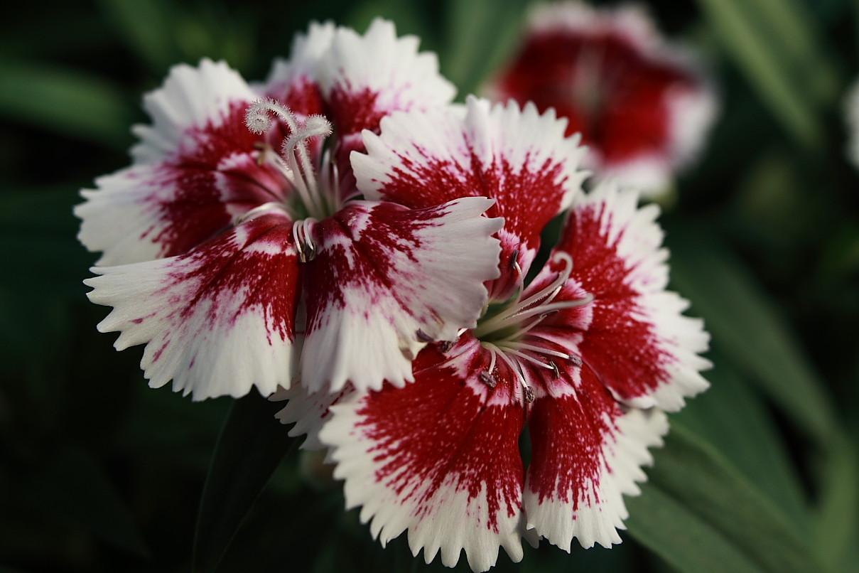 white flowers 7711
