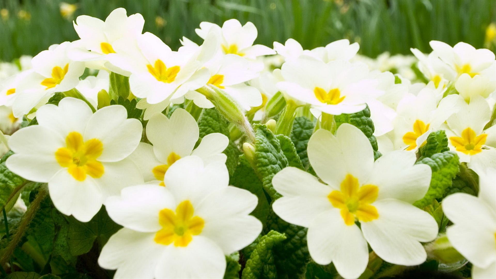white flowers 7722