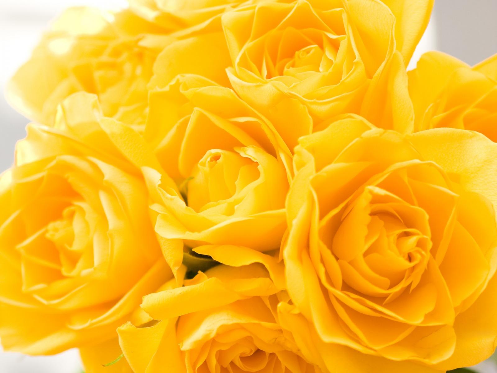 Yellow Wallpaper 16291 1600x1200px