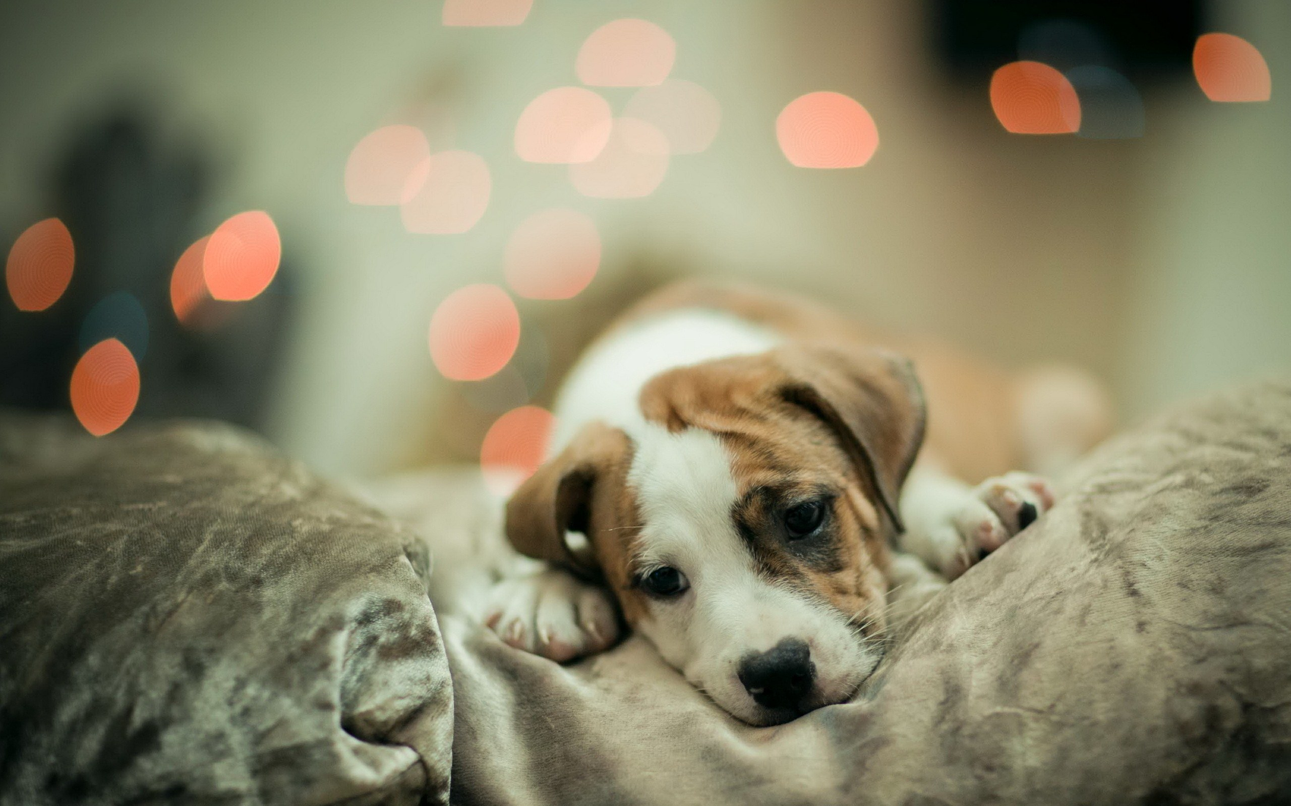 adorable dog mood wallpaper 43343