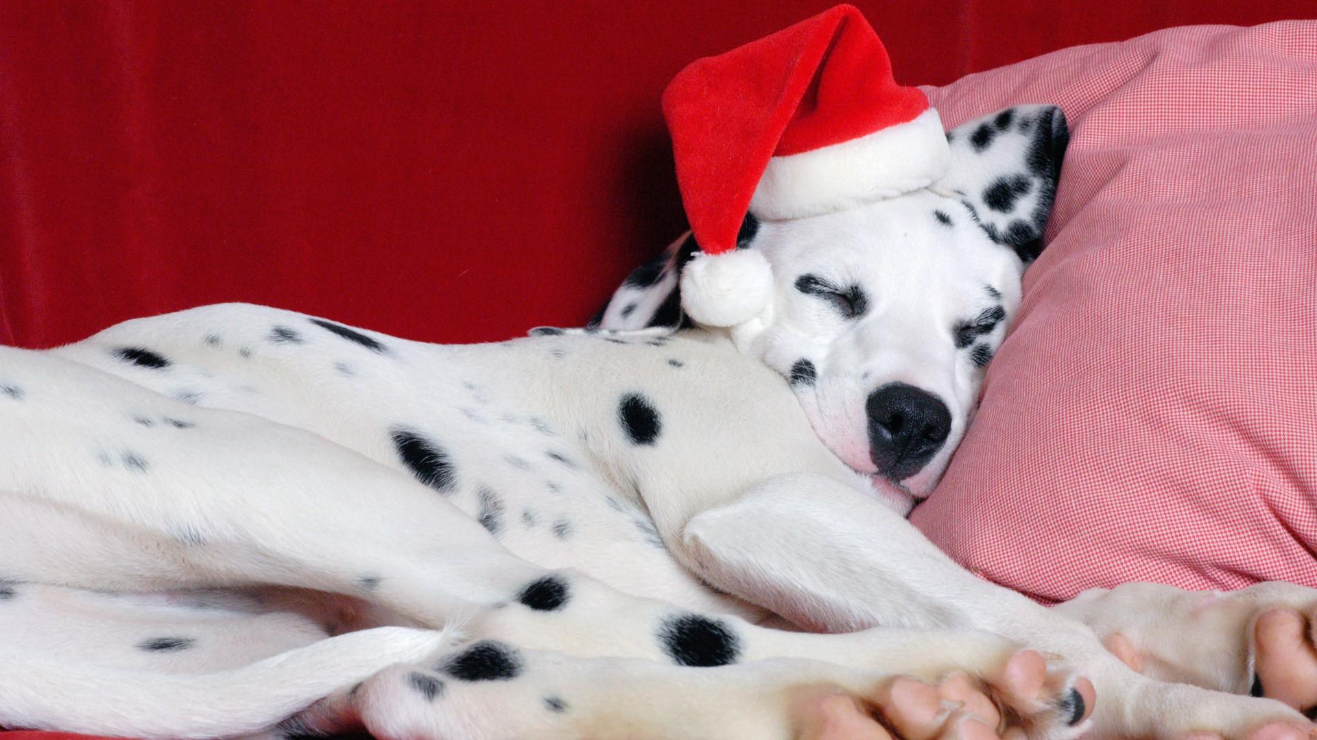 adorable santa hat wallpaper 41717