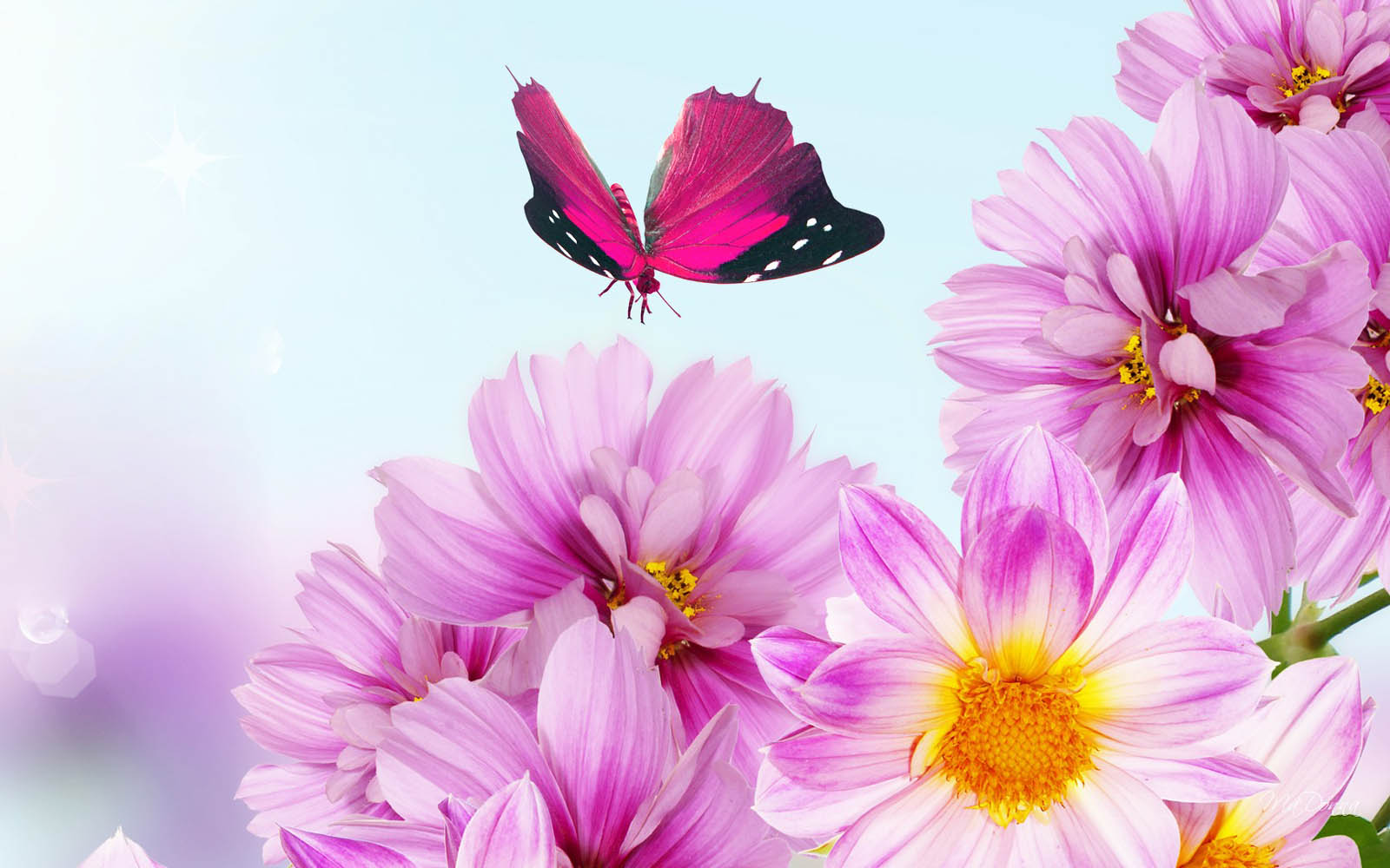 beautiful flower backgrounds 18210