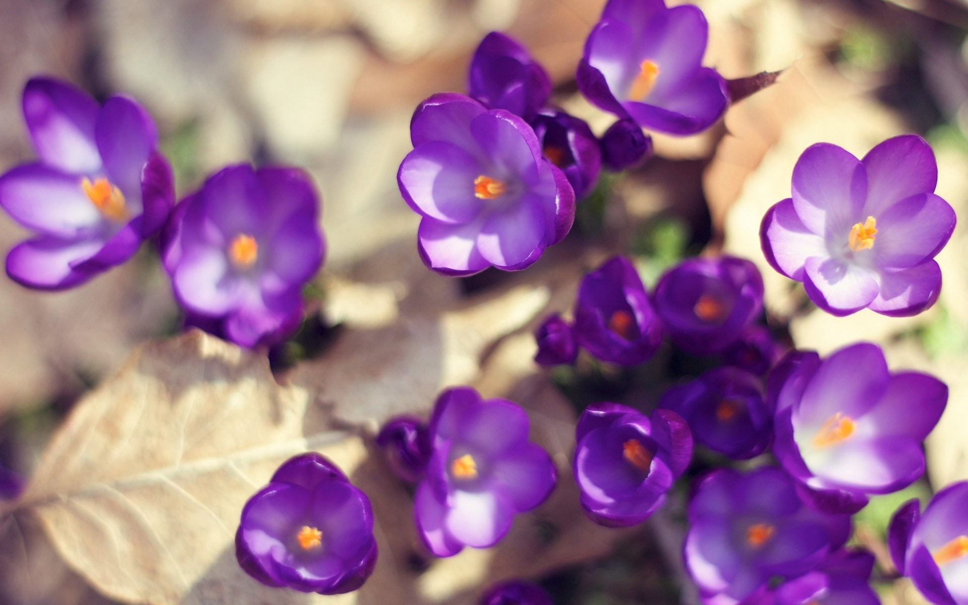 beautiful flower pictures 26799