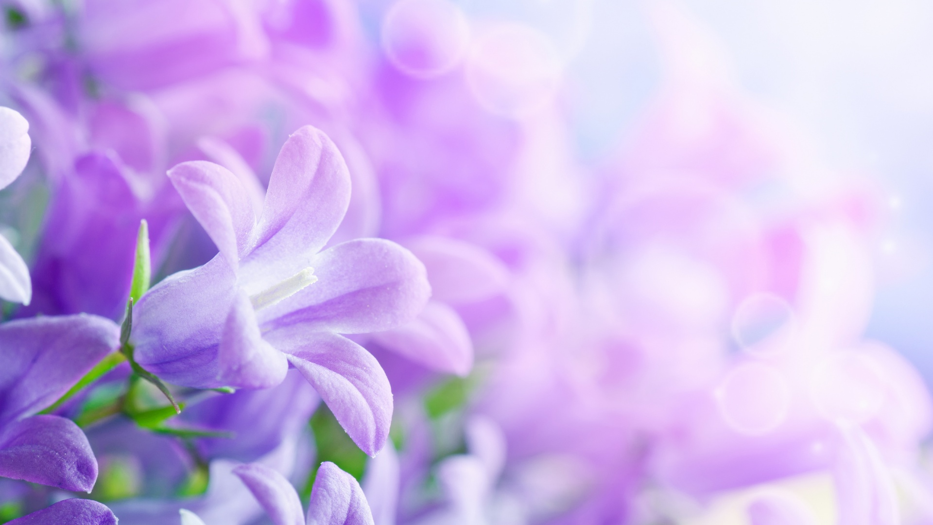 Beautiful Flowers Pictures 26794 1920x1080 px