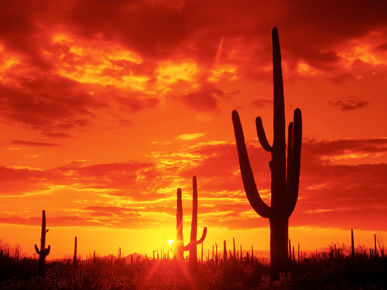 beautiful orange sunset 30008