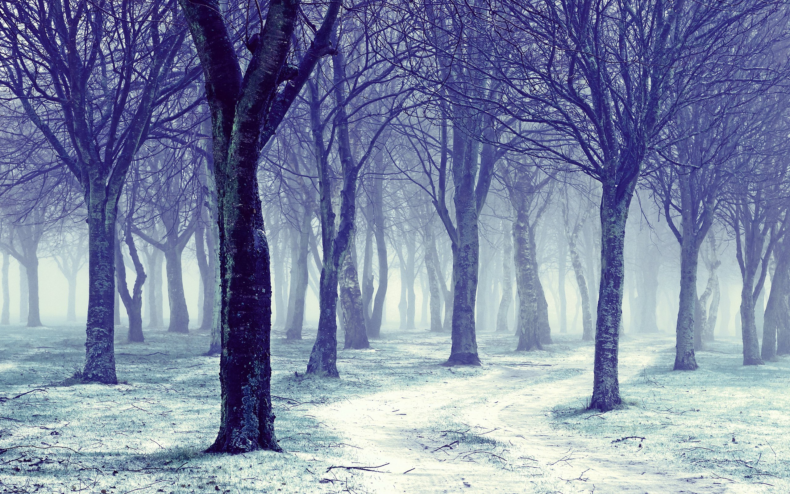beautiful snowy trees 32374