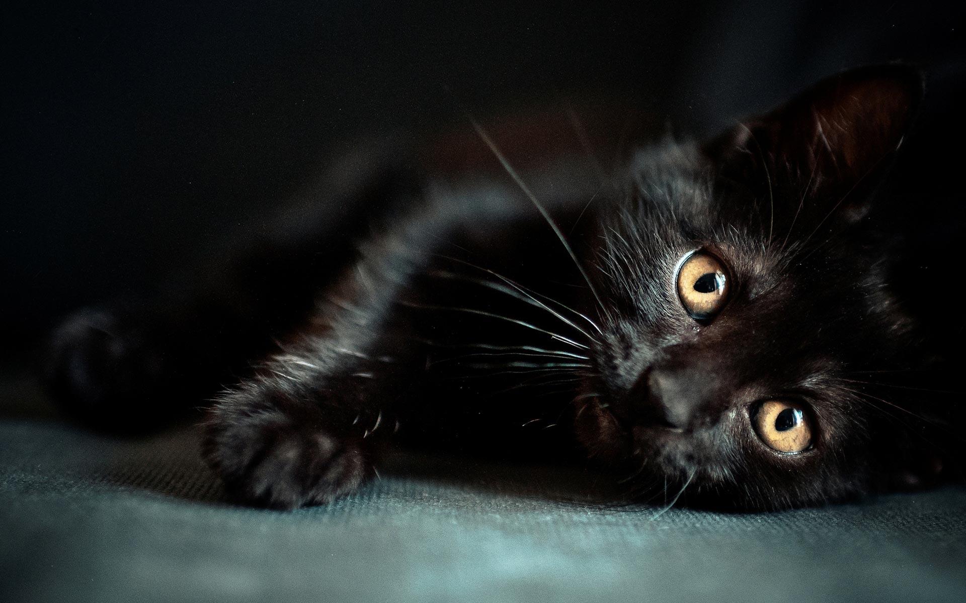 Wonderful Cat Wallpaper 1920x1200 - black-cats-24161-24823-hd-wallpapers  Image_1002953 .jpg