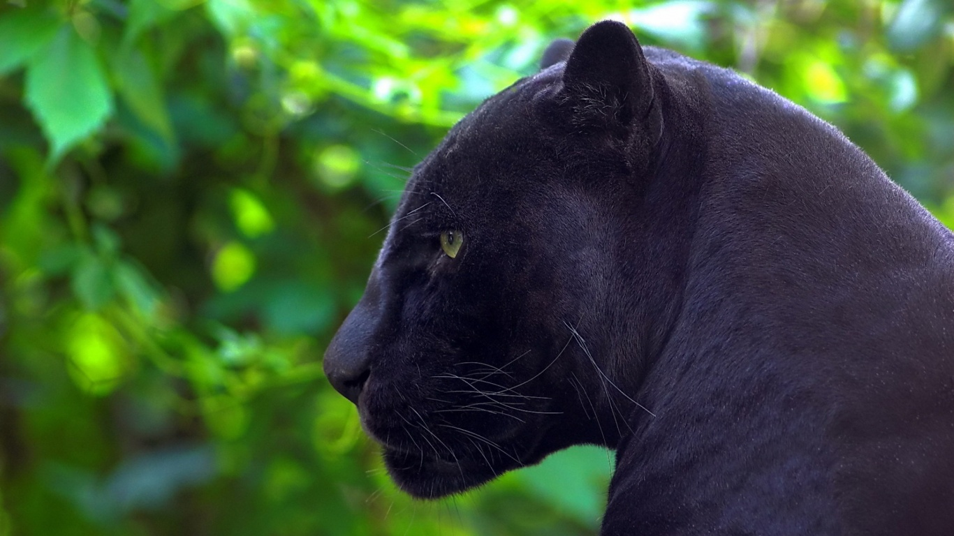 black panther 20073