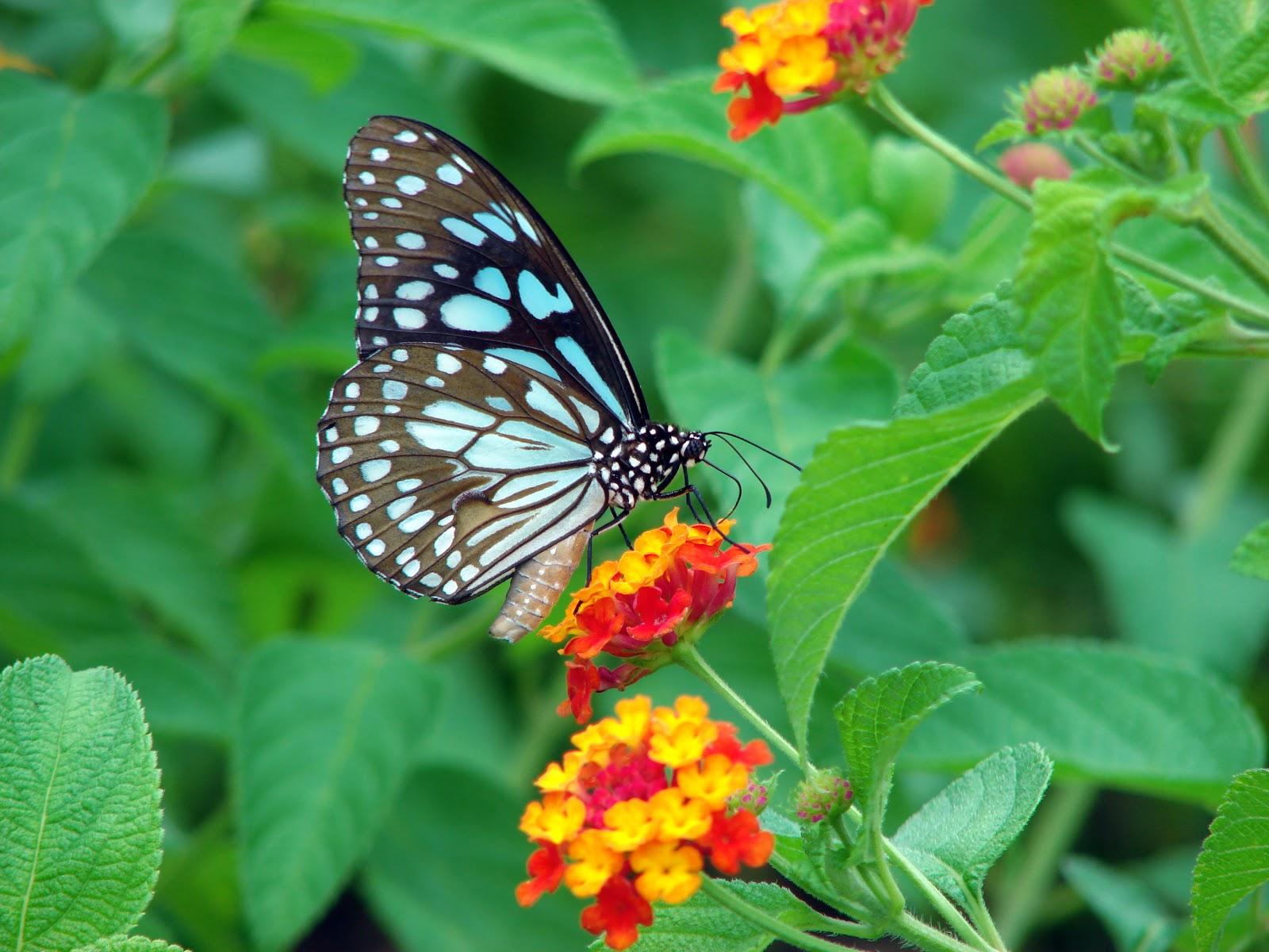 butterfly 13377