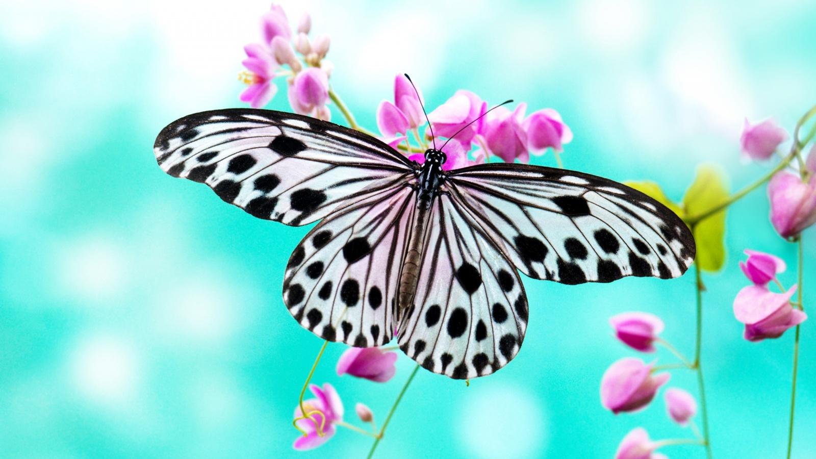 butterfly wallpaper 39775