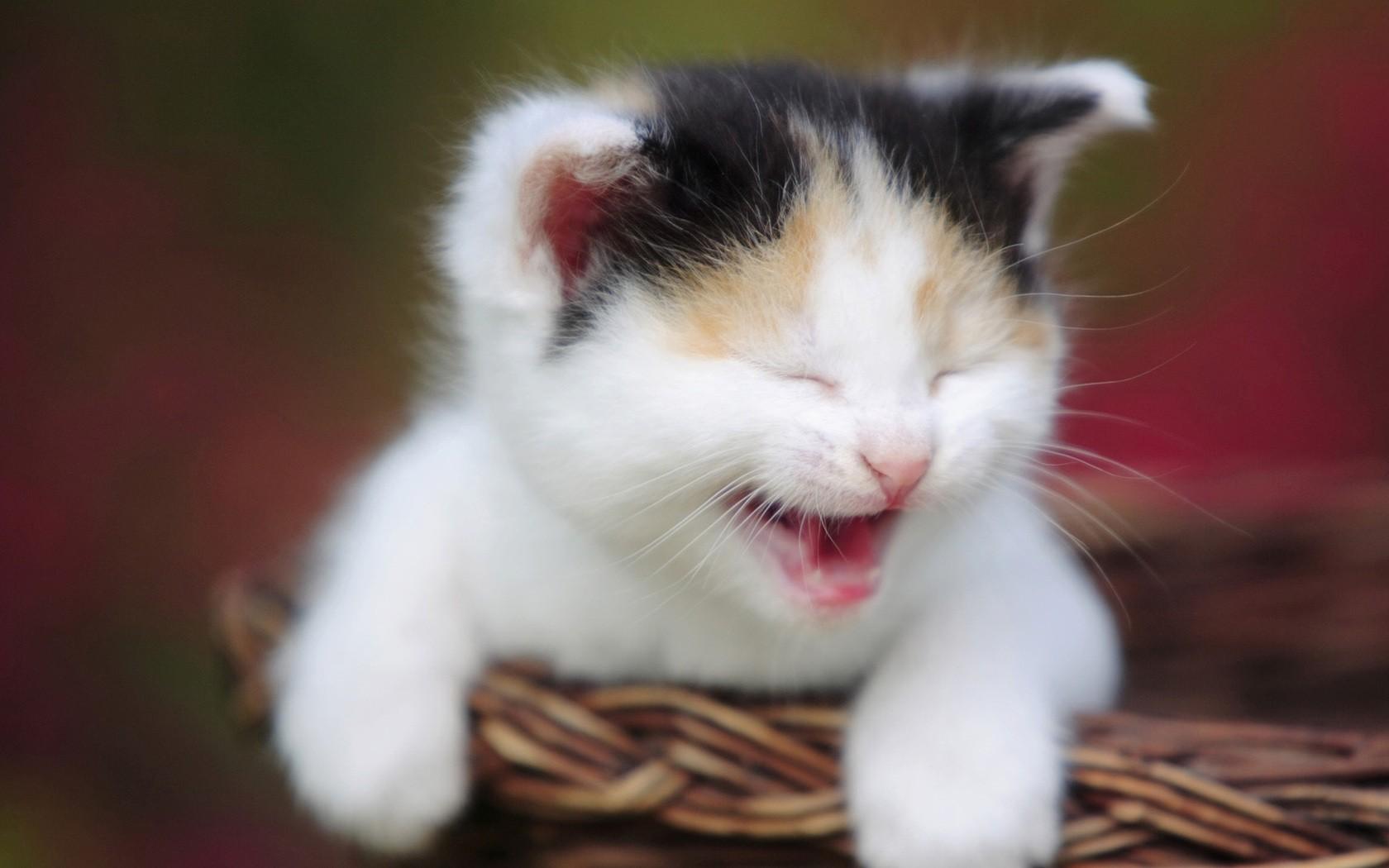 funny cats wallpaper 10813