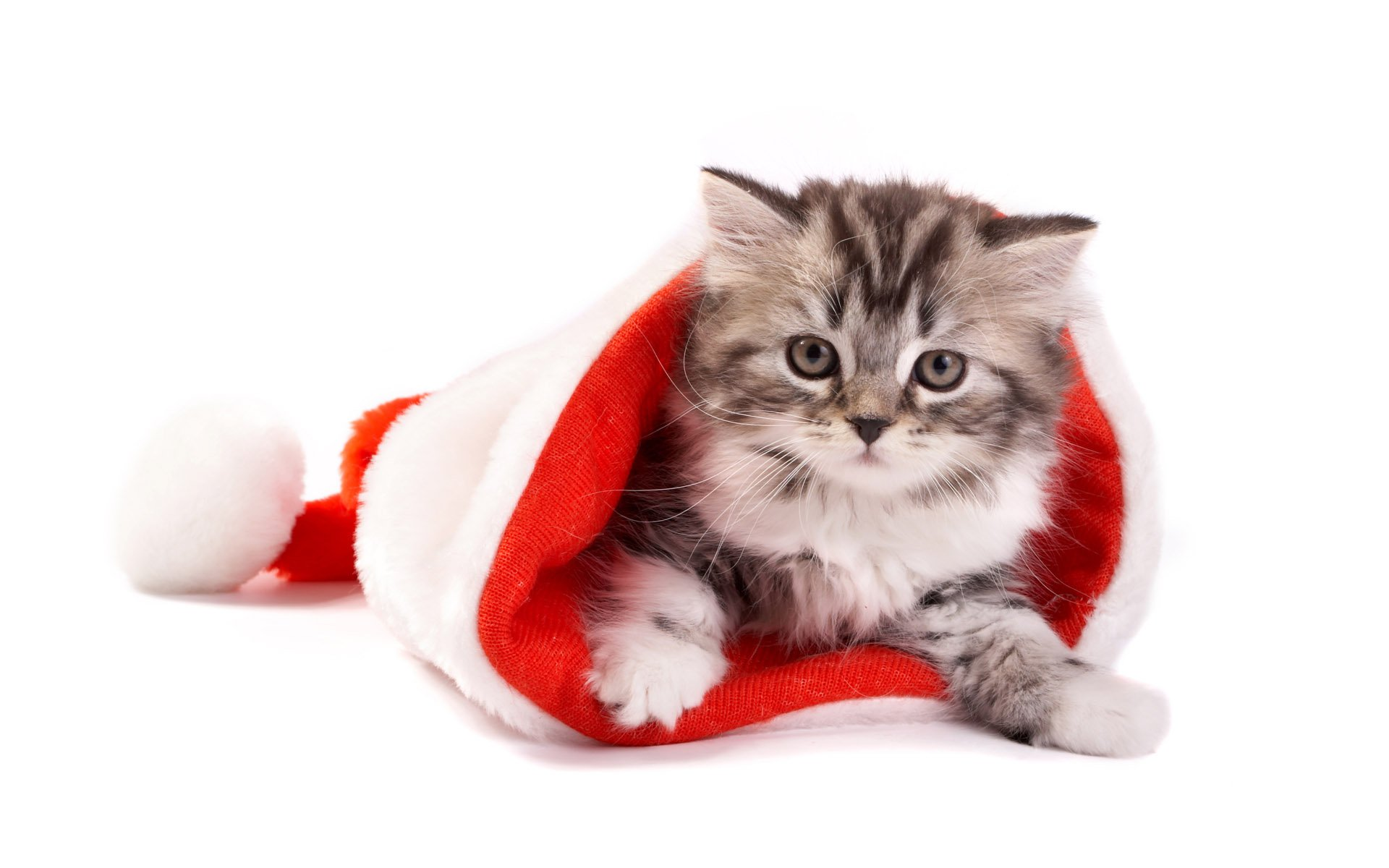 cute santa hat wallpaper 41716