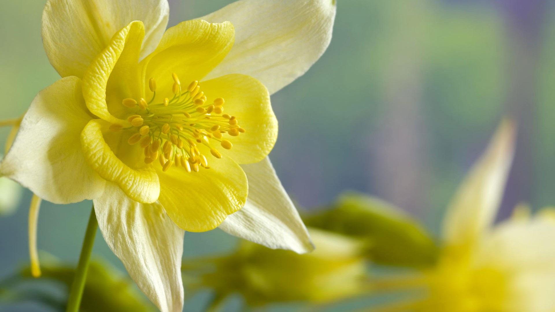 download daffodils 1920x1080 wallpaper - photo #16