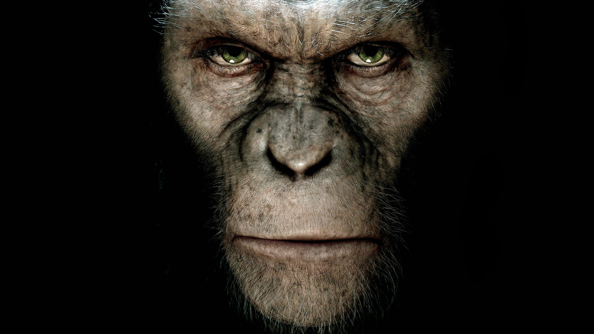 dawn of the planet of the apes 33543