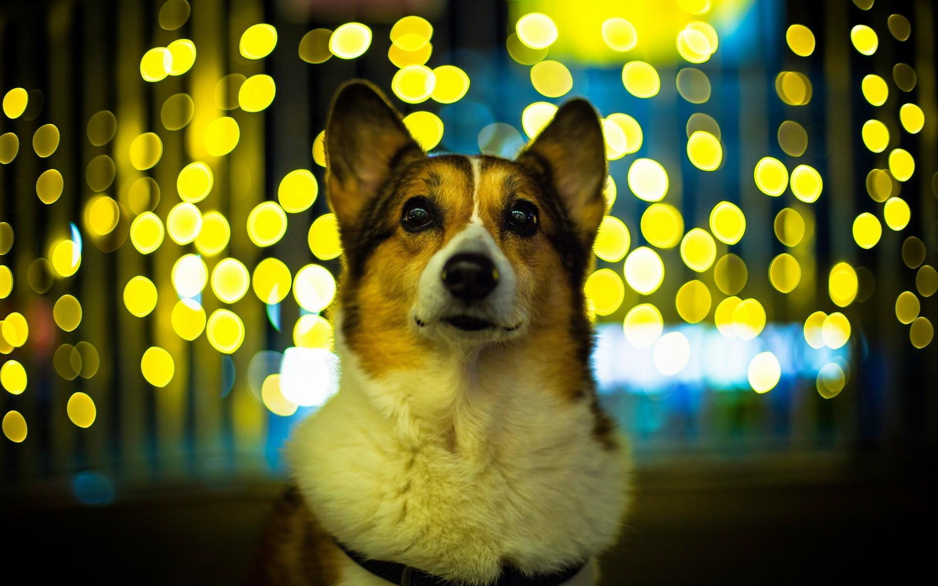 dog mood wallpaper 43349