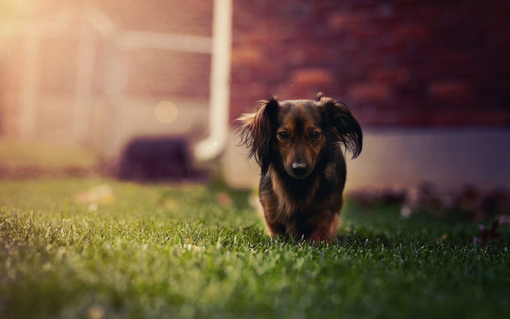 dog mood wallpapers 43342