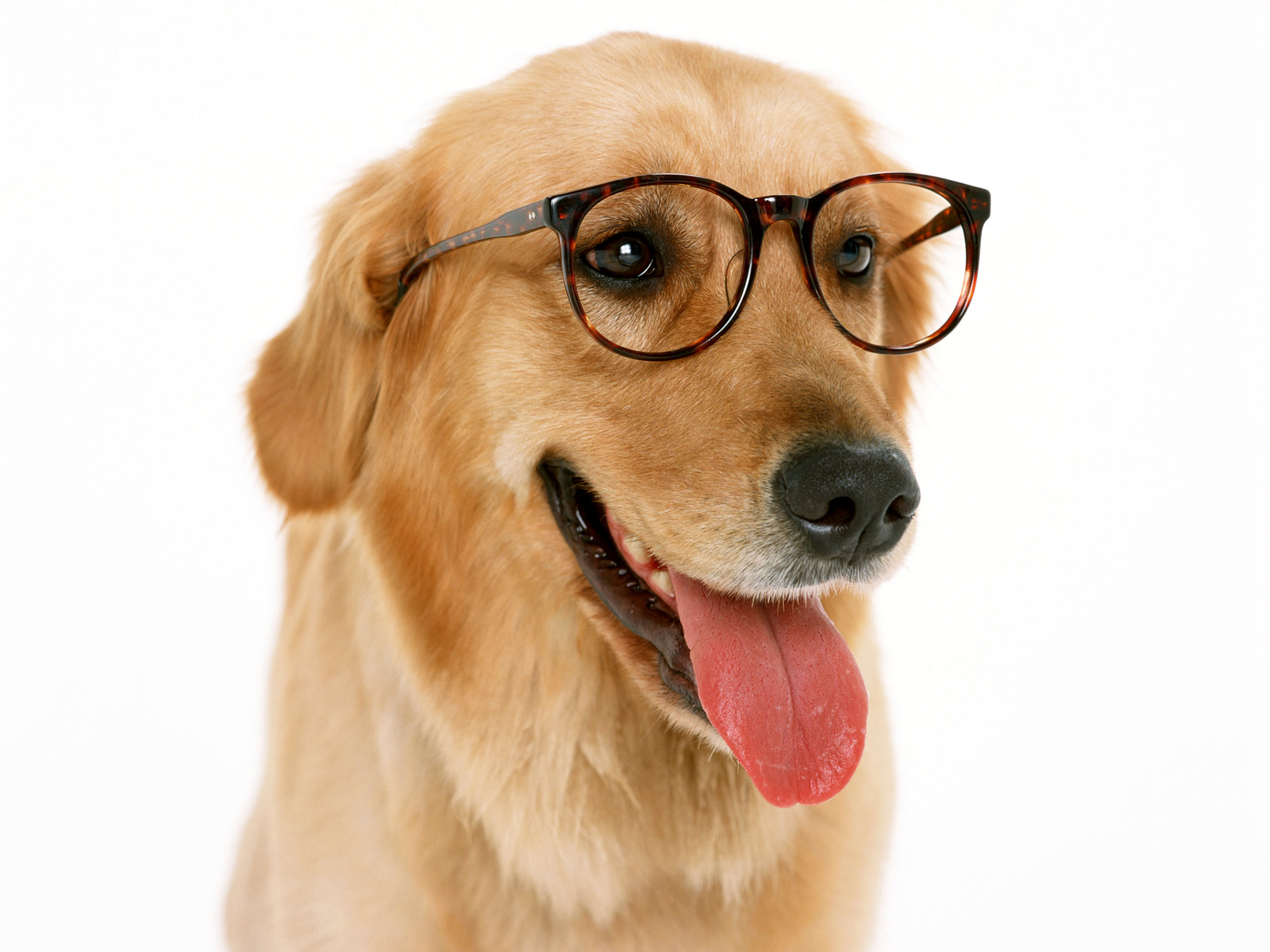 Image result for dog wearing glasses