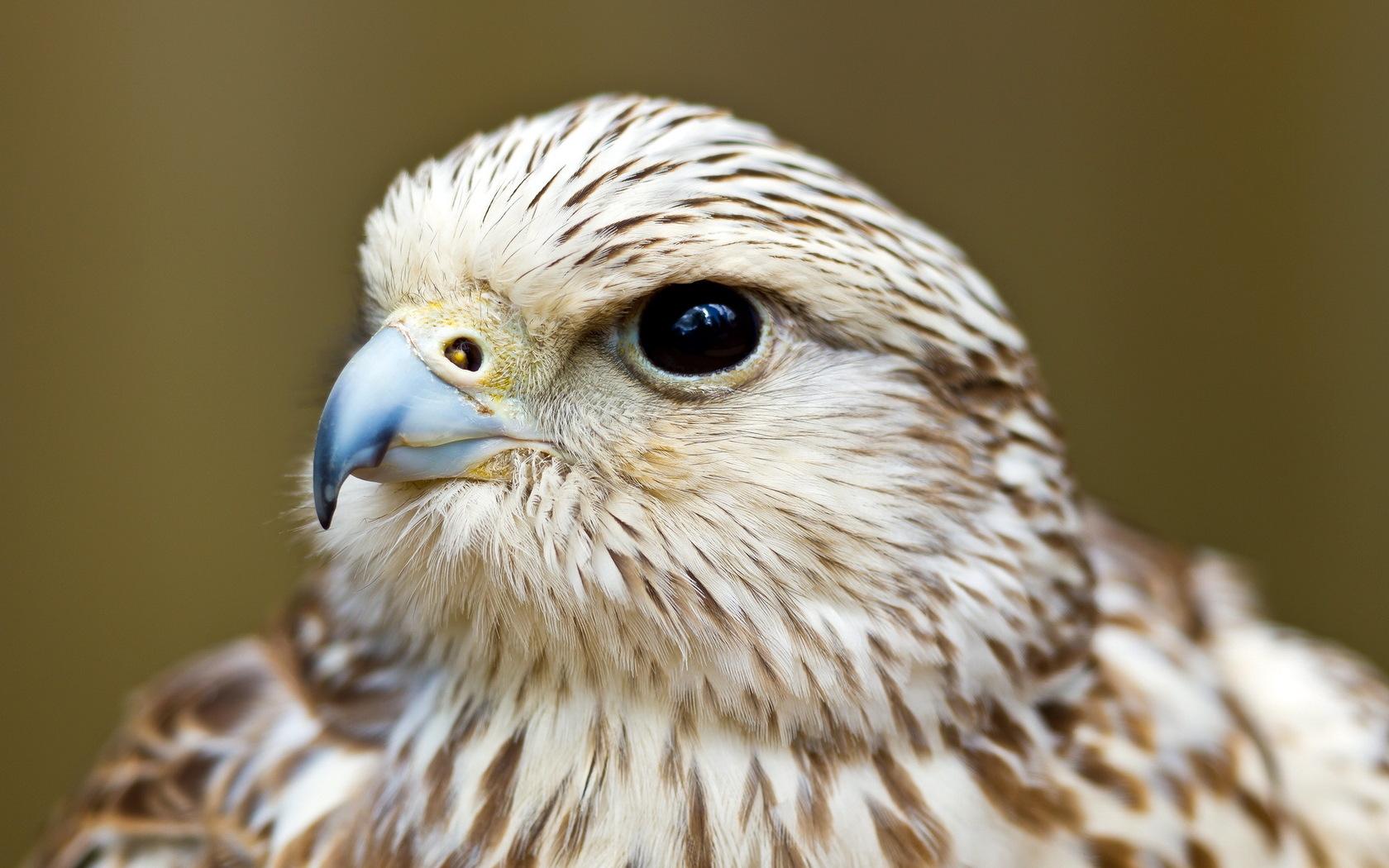 falcon hd 23427