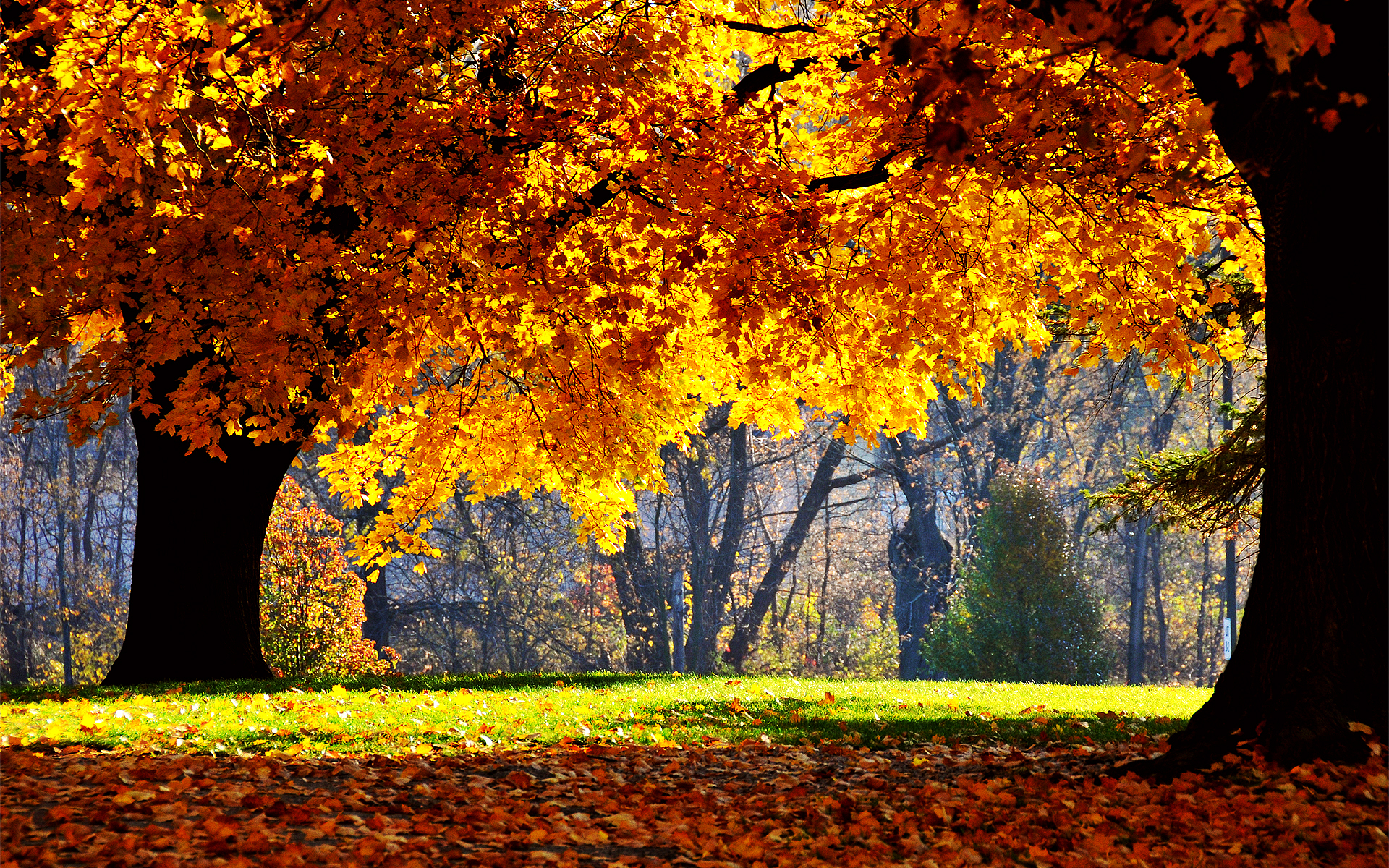 Fall Backgrounds 18184 1920x1200 px HDWallSourcecom