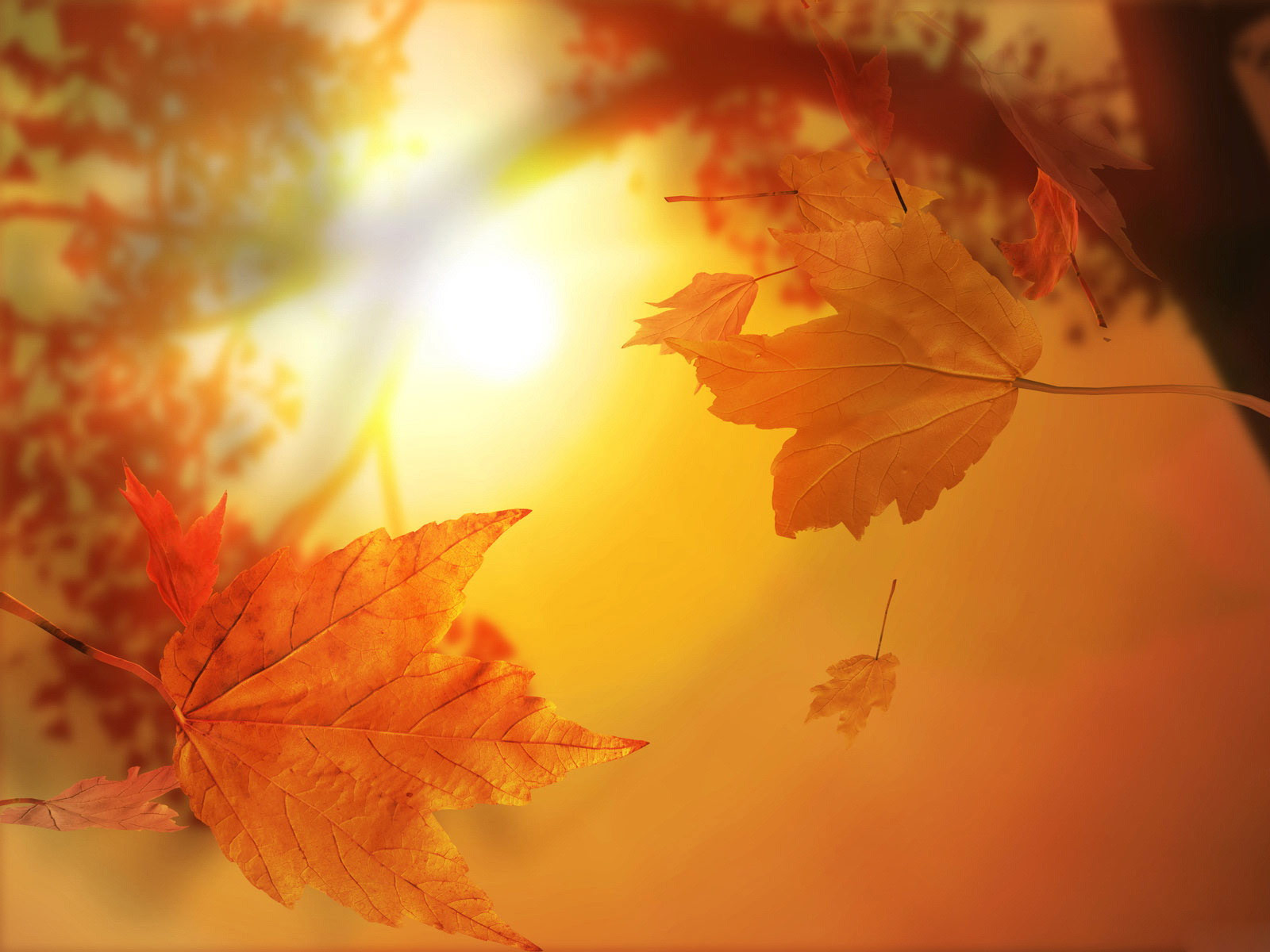 fall backgrounds 18186