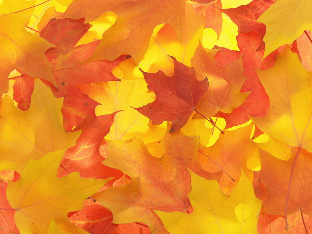 Fall Leaves Background 20804 1024x768 px ~ HDWallSource.com