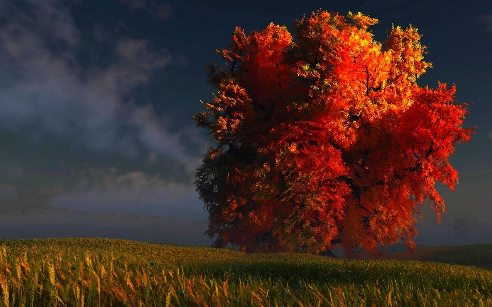 fall tree 29493