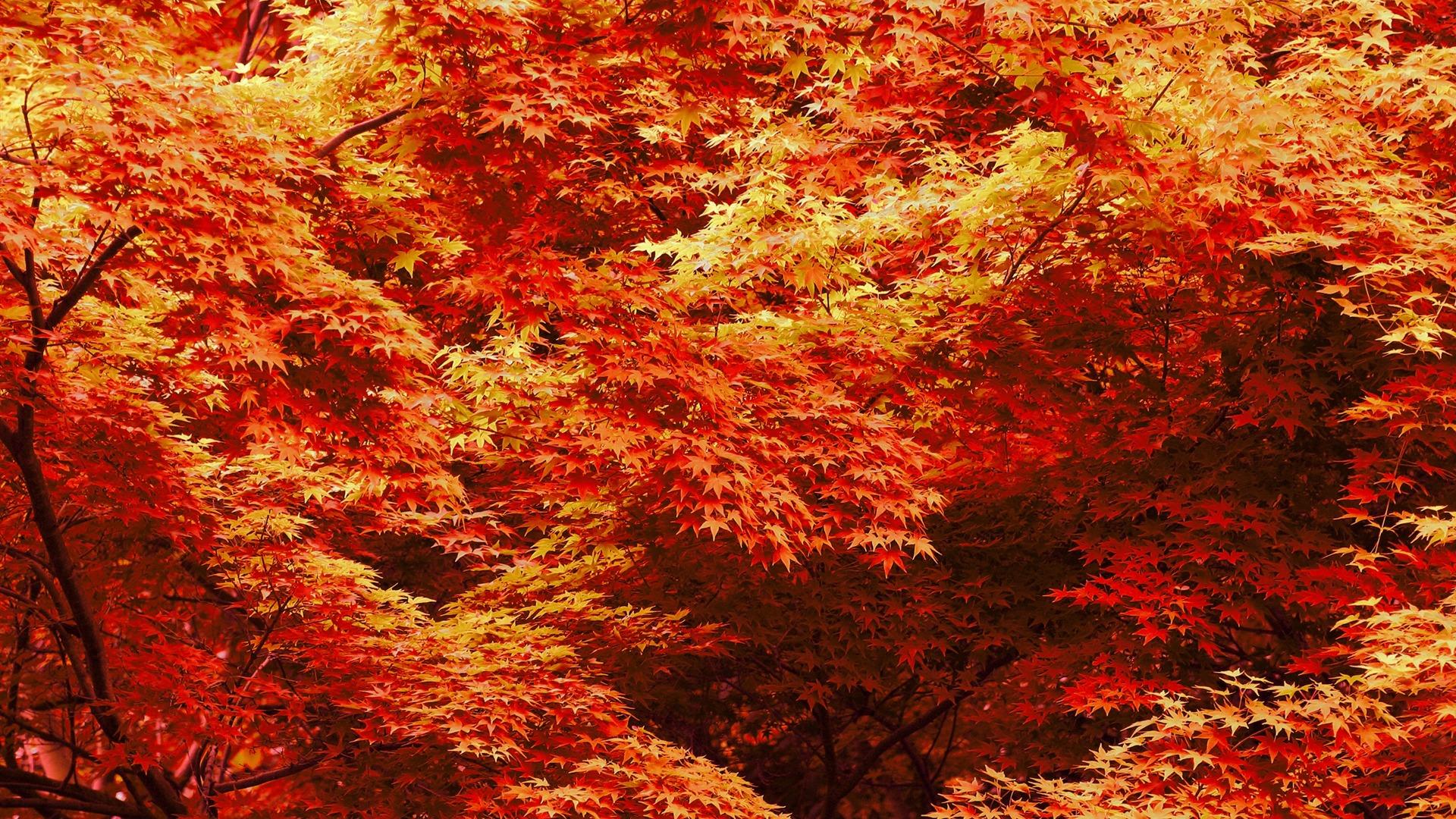 fall trees 29501