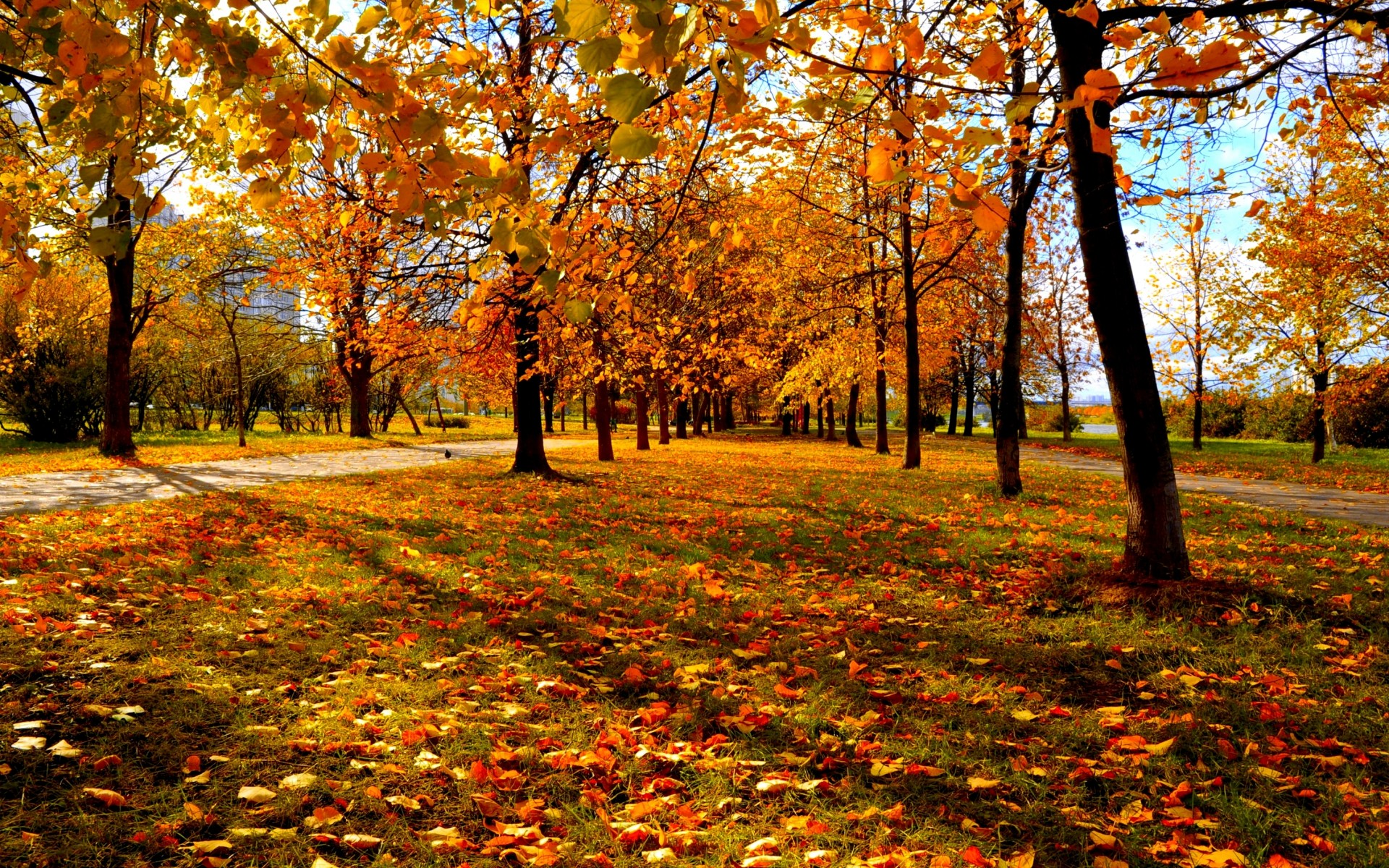Fall Trees Background 29498 1920x1200 Px