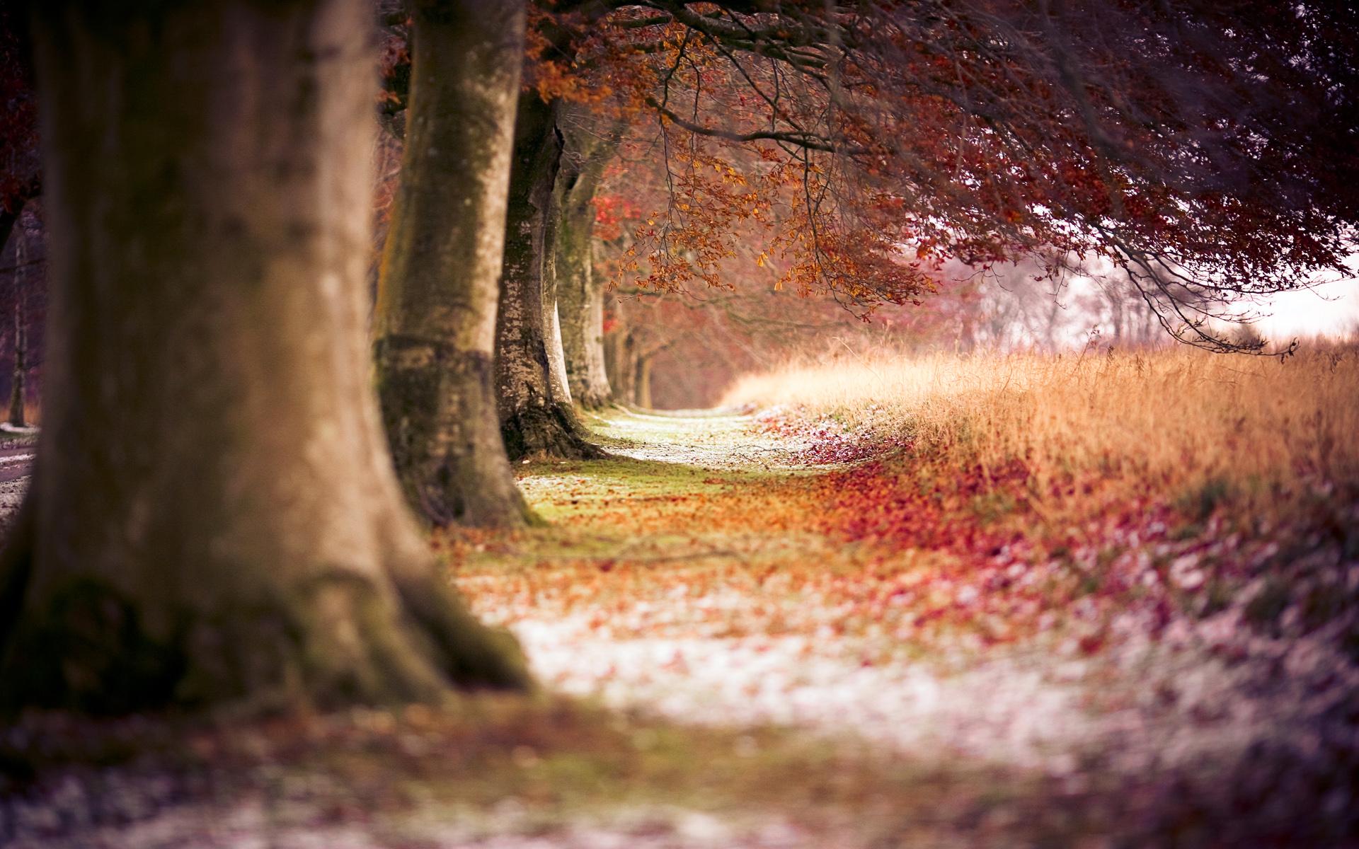 Hd wallpaper editing - Fall Trees Wallpaper Hd 29489