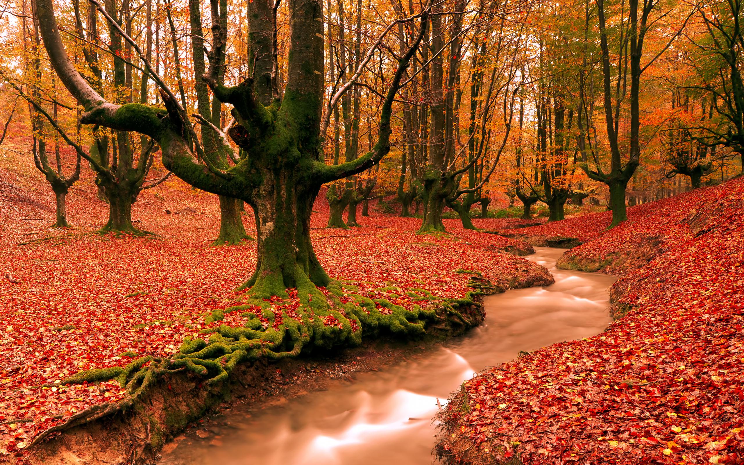 free autumn wallpaper 20818