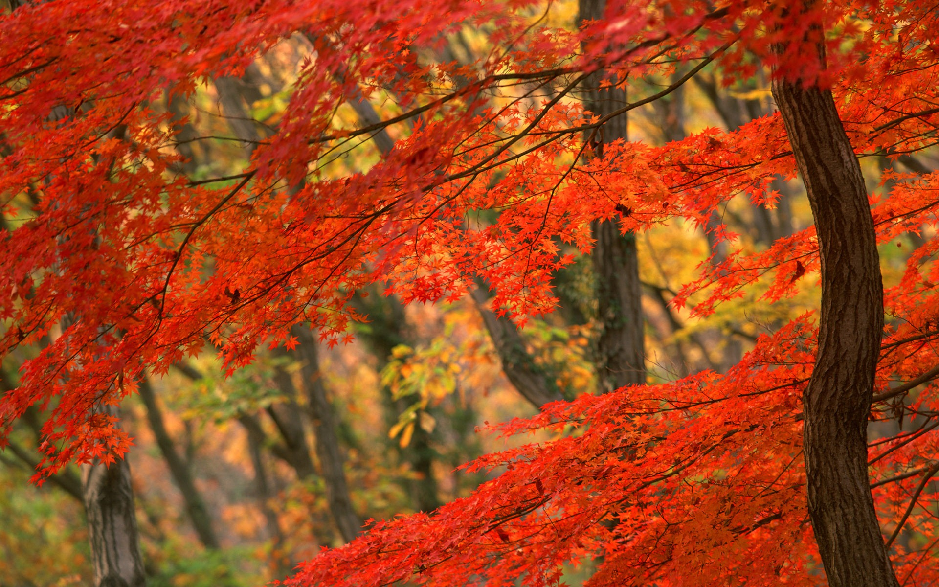 free autumn wallpaper 20821