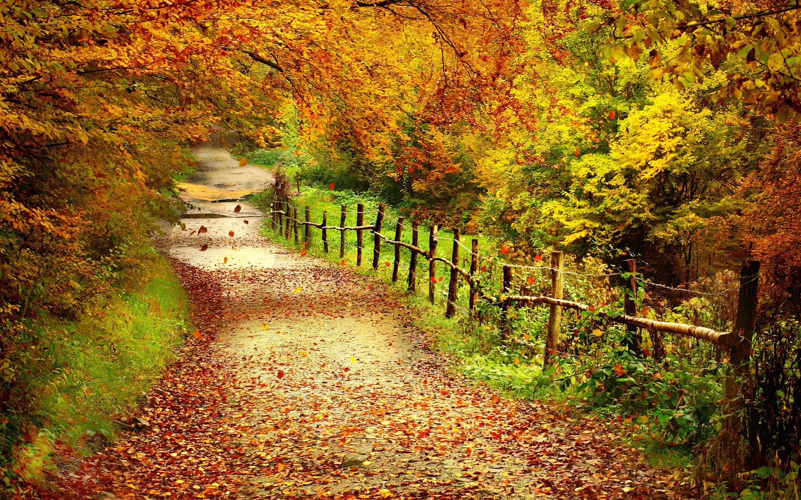 free autumn wallpaper hd 20813 2560x1600 px hdwallsourcecom