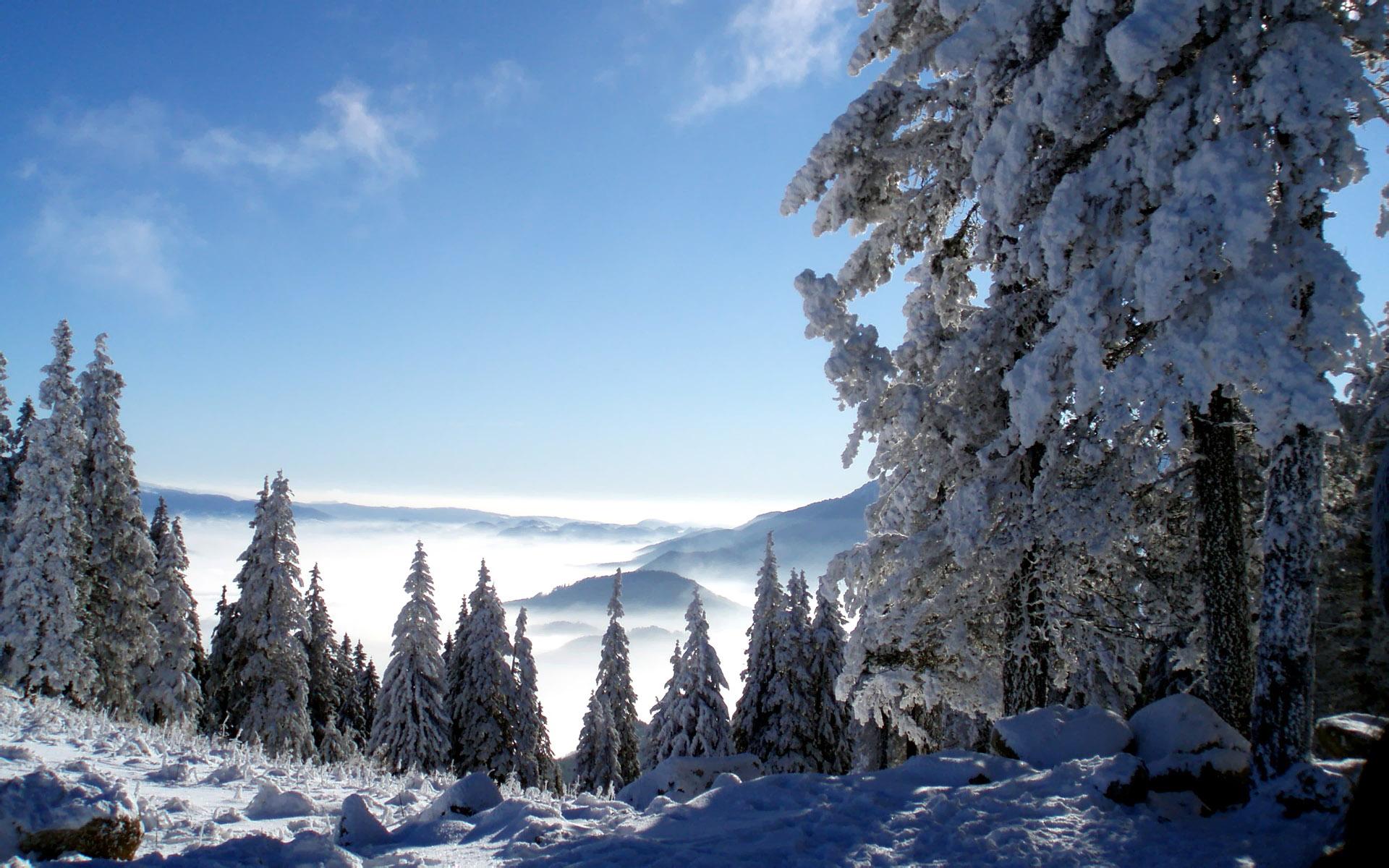 free snowy trees wallpaper 32372