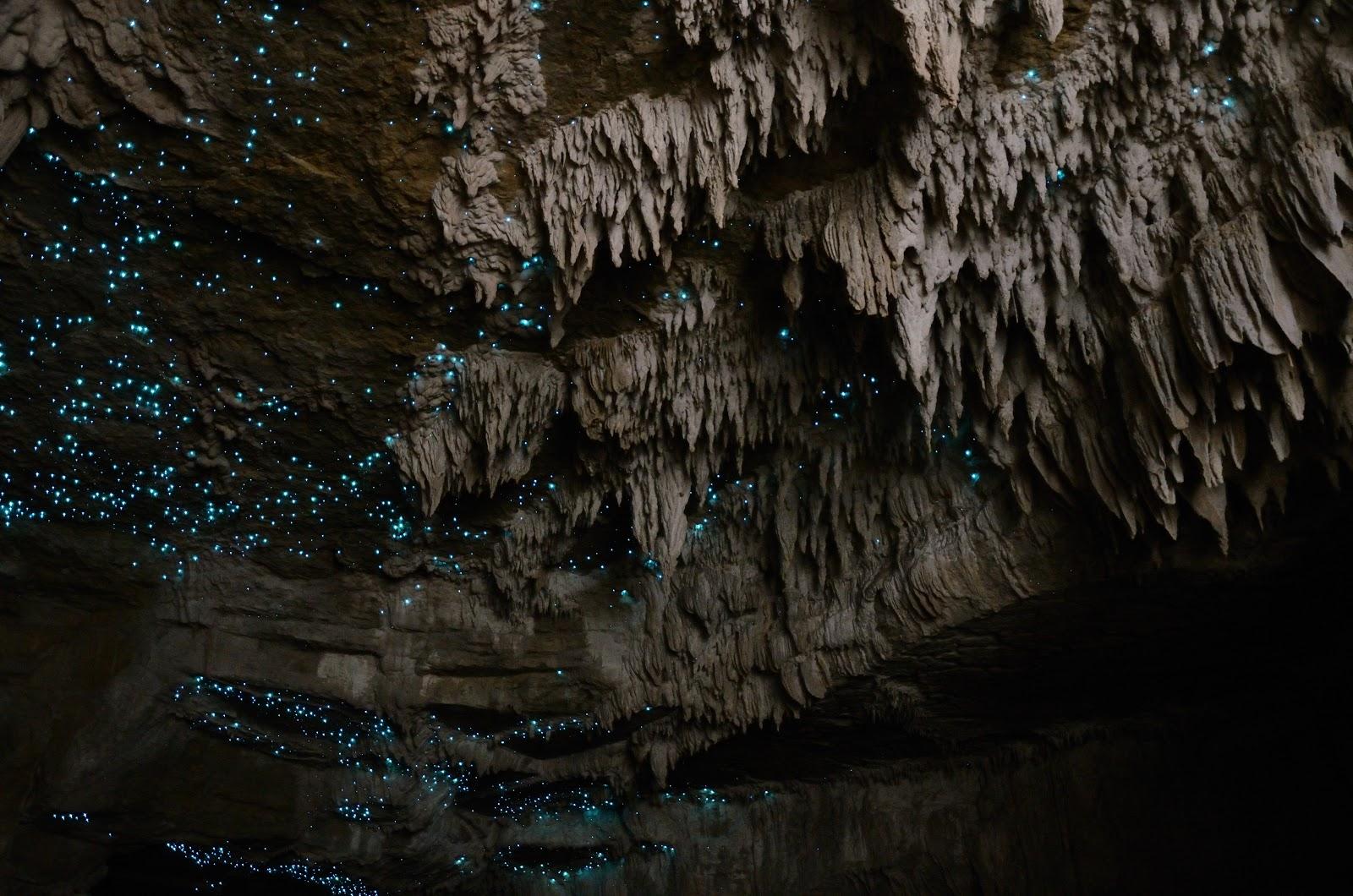 glow worm cave 8759