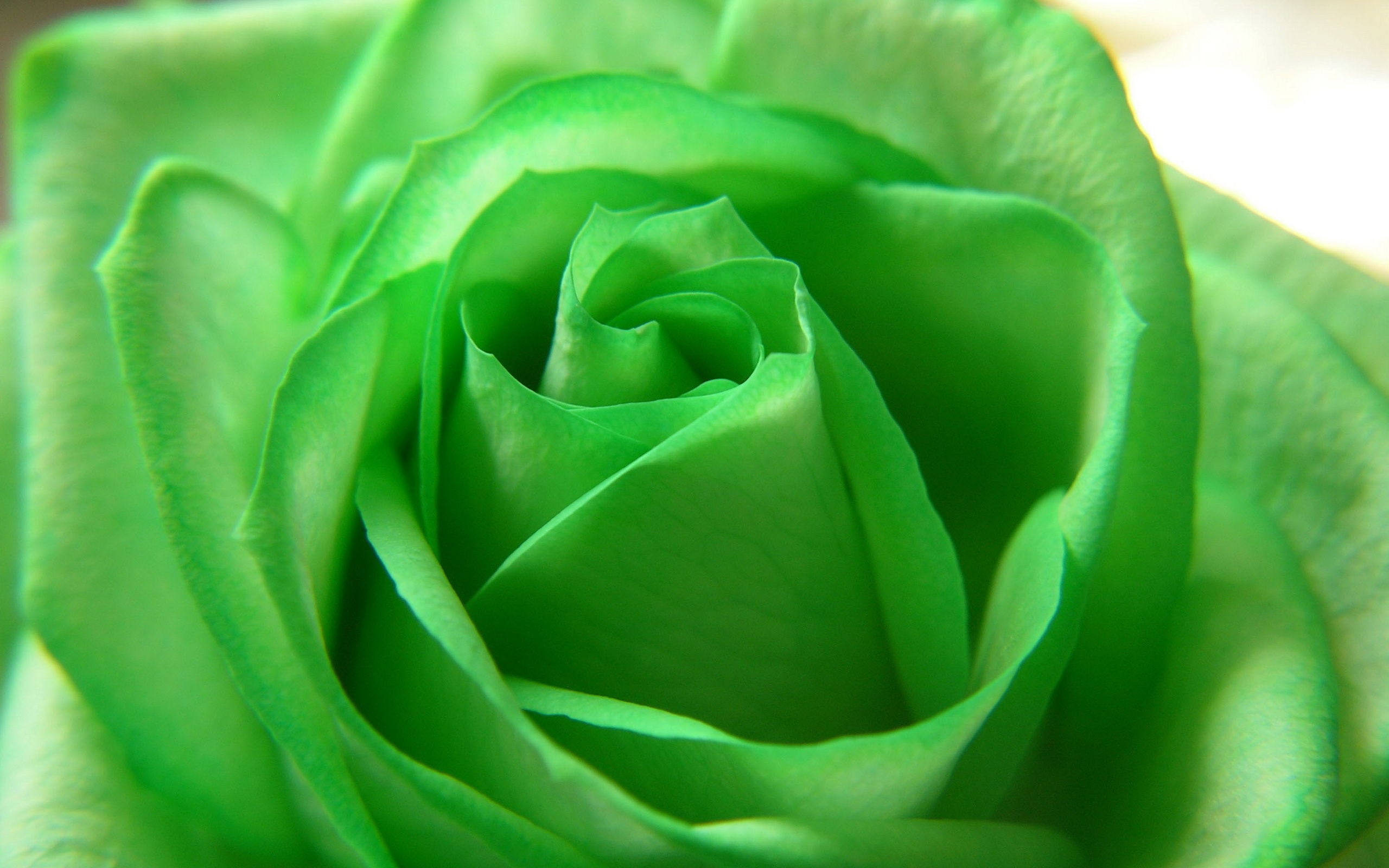 Green Flower px HDWallSource