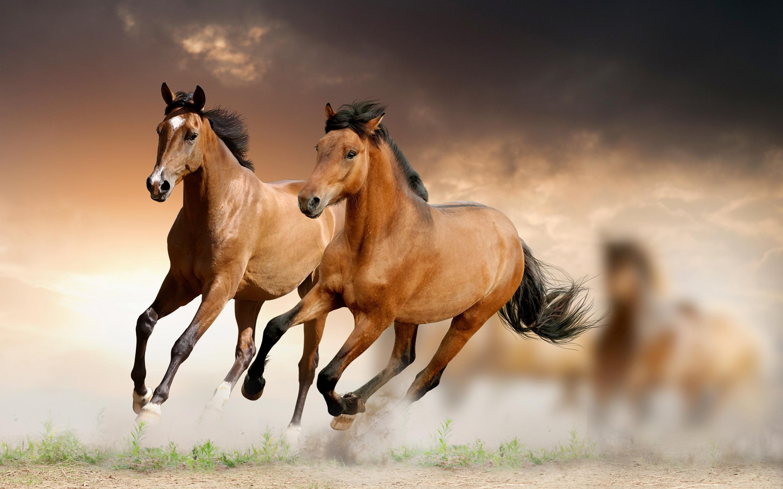 horses wallpaper 31005