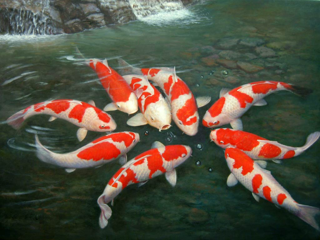 Koi fish 7917 1024x768 px for Orange coy fish